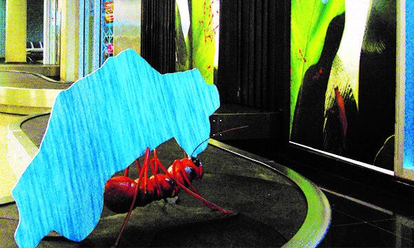 MOCK UP EM ESTEIRA DE BAGAGEM - BIO EXTRATUS Com uma ação exclusiva nas quatro esteiras de bagagem do Aeroporto de Belém. Foram colocados dois mock up´s em cada esteira, chamando assim a atenção dos passageiros que desembarcam na capital do Pará!